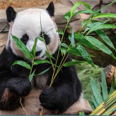 Learn Fluent Chinese Fun - FREE by Sophia Yu